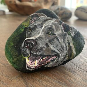 hond Pitbull