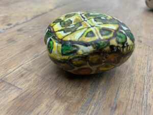 schildpad buikje