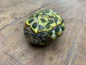 schildpad op rug