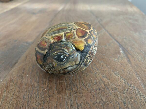 schildpad steen